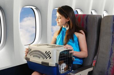 viagem-aviao-animal-estimacao-2