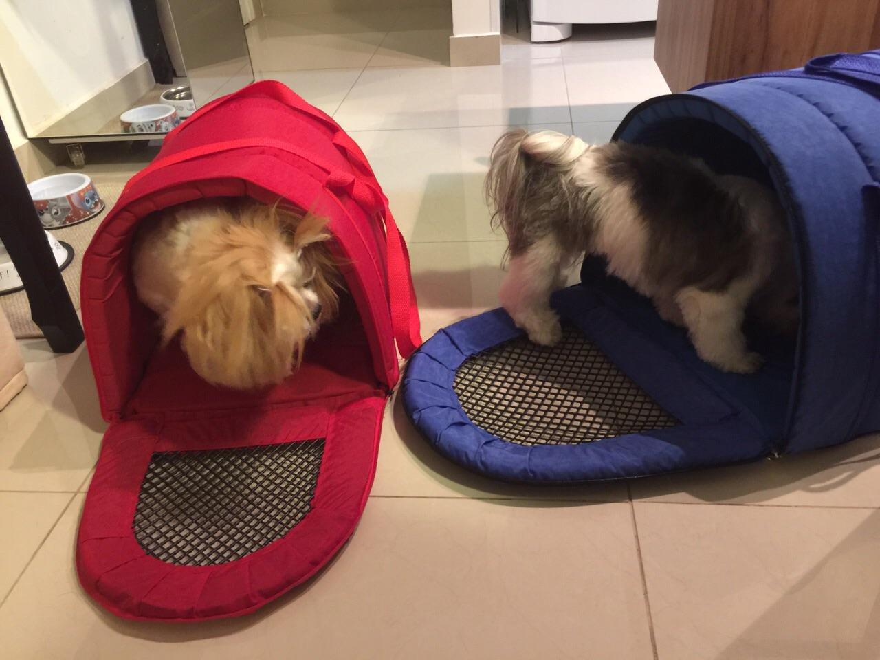 Cissa e Calu, nos preparativos da viagem, cada uma na sua malinha.