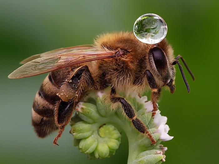 abelha 2 TL