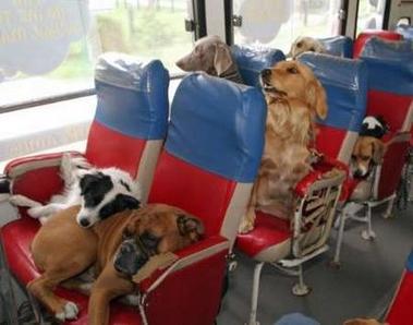 viagem-de-onibus-com-o-cachorro