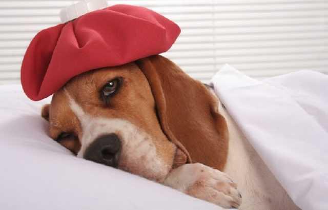 Cachorro-Mal-de-Saúde